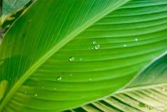 Πράσινη σύσταση των πτώσεων φύλλα Στοκ φωτογραφία με δικαίωμα ελεύθερης χρήσης