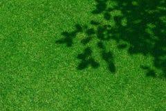 Πράσινη σύσταση υποβάθρου χλόης Στοκ φωτογραφία με δικαίωμα ελεύθερης χρήσης