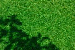 Πράσινη σύσταση υποβάθρου χλόης Στοκ Φωτογραφία