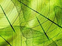 Πράσινη σύσταση φυλλώματος Στοκ φωτογραφία με δικαίωμα ελεύθερης χρήσης