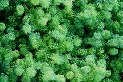 πράσινη σύσταση φύλλων ανα&sigm στοκ φωτογραφίες με δικαίωμα ελεύθερης χρήσης