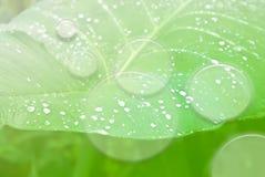 πράσινη σύσταση φύλλων λεπ& στοκ εικόνες