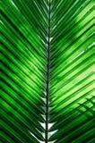 Πράσινη σύσταση φύλλων φοινικών στοκ φωτογραφίες
