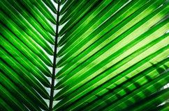 Πράσινη σύσταση φύλλων φοινικών στοκ φωτογραφία με δικαίωμα ελεύθερης χρήσης