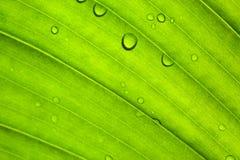 πράσινη σύσταση φύλλων Στοκ Εικόνες