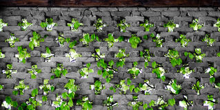 Πράσινη σύσταση φύσης Στοκ εικόνες με δικαίωμα ελεύθερης χρήσης