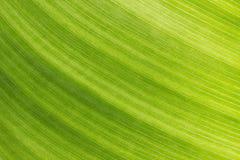 πράσινη σύσταση φύλλων στοκ εικόνες με δικαίωμα ελεύθερης χρήσης