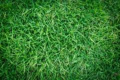 Πράσινη σύσταση χλόης ή πράσινο υπόβαθρο χλόης πράσινη χλόη για το γήπεδο του γκολφ, το γήπεδο ποδοσφαίρου ή το αθλητικό υπόβαθρο Στοκ Φωτογραφίες