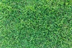 Πράσινη σύσταση χλόης ή πράσινο υπόβαθρο χλόης πράσινη χλόη για το γήπεδο του γκολφ, το γήπεδο ποδοσφαίρου ή το αθλητικό υπόβαθρο Στοκ Φωτογραφία