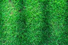 Πράσινη σύσταση χλόης ή πράσινο υπόβαθρο χλόης Στοκ εικόνες με δικαίωμα ελεύθερης χρήσης