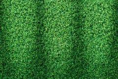 Πράσινη σύσταση χλόης ή πράσινο υπόβαθρο χλόης Στοκ Φωτογραφίες