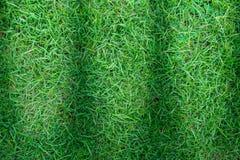 Πράσινη σύσταση χλόης ή πράσινο υπόβαθρο χλόης Στοκ Εικόνα