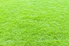 πράσινη σύσταση χλόης ανασκόπησης Στοκ φωτογραφία με δικαίωμα ελεύθερης χρήσης