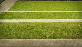 Πράσινη σύσταση χλόης και φωτογραφία υποβάθρου βημάτων δέντρων Στοκ Φωτογραφίες