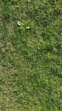 πράσινη σύσταση χλόης αφηρημένη σύσταση Στοκ εικόνες με δικαίωμα ελεύθερης χρήσης
