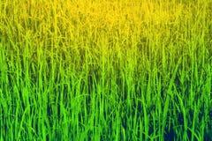 Πράσινη σύσταση χλόης στην ηλιόλουστη ημέρα, υπόβαθρο φύσης Στοκ φωτογραφίες με δικαίωμα ελεύθερης χρήσης