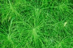 πράσινη σύσταση χλόης Στοκ εικόνες με δικαίωμα ελεύθερης χρήσης