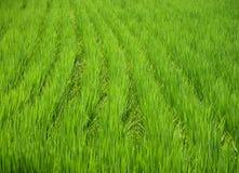 πράσινη σύσταση