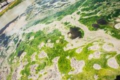 Πράσινη τέχνη Goo Στοκ Εικόνες
