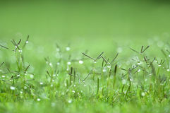 πράσινη ταπετσαρία χλόης Στοκ Φωτογραφία