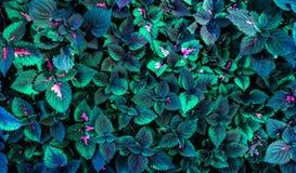 Πράσινη τοπ άποψη υποβάθρου φύλλων στοκ εικόνα με δικαίωμα ελεύθερης χρήσης