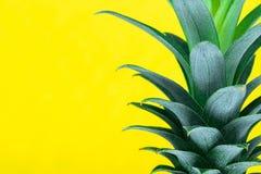 Πράσινη τοπ κορώνα ανανά ανάπτυξης στο κίτρινο υπόβαθρο με το διάστημα αντιγράφων στοκ φωτογραφία με δικαίωμα ελεύθερης χρήσης