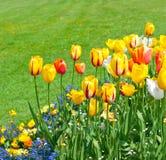 πράσινη τουλίπα άνοιξη χλόης λουλουδιών Στοκ Εικόνα