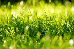 πράσινη τούφα χλόης Στοκ Φωτογραφίες