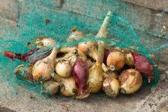 Πράσινη τσάντα πλέγματος με τα μικρά κρεμμύδια Στοκ Εικόνες