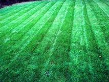 Πράσινη υπηρεσία προσοχής χορτοταπήτων χλόης γρασιδιών στοκ φωτογραφία με δικαίωμα ελεύθερης χρήσης
