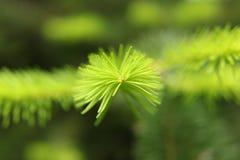 Πράσινη φαντασία Στοκ φωτογραφίες με δικαίωμα ελεύθερης χρήσης