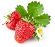 πράσινη φράουλα φύλλων λο& Στοκ Φωτογραφίες