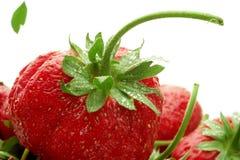 πράσινη φράουλα φύλλων Στοκ φωτογραφίες με δικαίωμα ελεύθερης χρήσης