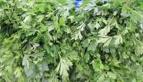 Πράσινη φρέσκια συγκομιδή μαϊντανού του καλοκαιριού Στοκ φωτογραφία με δικαίωμα ελεύθερης χρήσης