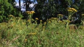 Πράσινη φρέσκια χλόη με τα άγρια λουλούδια στον αέρα απόθεμα βίντεο
