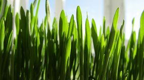Πράσινη φρέσκια χλόη την άνοιξη στοκ φωτογραφία με δικαίωμα ελεύθερης χρήσης