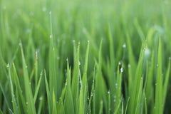 Πράσινη φρέσκια χλόη Στοκ φωτογραφία με δικαίωμα ελεύθερης χρήσης
