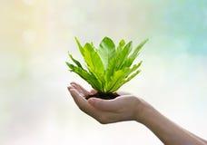 Πράσινη φτέρη στα χέρια στο τροπικό υπόβαθρο θερινών θαμπάδων φύσης στοκ φωτογραφία με δικαίωμα ελεύθερης χρήσης