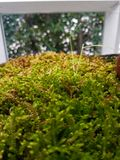 Πράσινη φτέρη στο σπίτι γυαλιού Στοκ Εικόνα