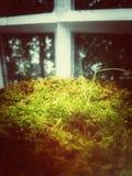 Πράσινη φτέρη στο σπίτι γυαλιού στοκ εικόνες με δικαίωμα ελεύθερης χρήσης