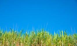 Πράσινη φωτογραφία χλόης και μπλε ουρανού Ηλιόλουστος πράσινος τομέας κάτω από το σαφή μπλε ουρανό Πρότυπο θερινών εμβλημάτων με  Στοκ Εικόνες