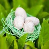 Πράσινη φωλιά με τα αυγά στα πράσινα φύλλα Στοκ Εικόνα