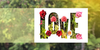 Πράσινη φύση αγάπης αγάπης Στοκ εικόνα με δικαίωμα ελεύθερης χρήσης