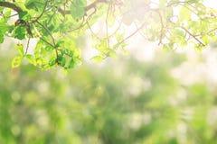 πράσινη φύση ανασκόπησης Στοκ Φωτογραφία