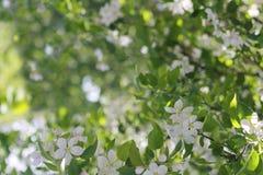 πράσινη φύση ανασκόπησης Στοκ Εικόνα