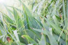 πράσινη φύση ανασκόπησης Στοκ εικόνα με δικαίωμα ελεύθερης χρήσης