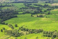 Πράσινη φύση επαρχίας τομέων ρυζιού στοκ εικόνες
