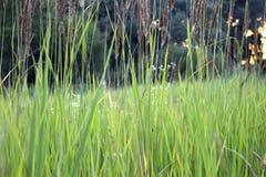 πράσινη φύση λιβαδιών χλόης Στοκ εικόνες με δικαίωμα ελεύθερης χρήσης