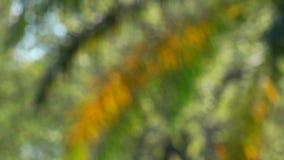 Πράσινη φύση με το σπινθήρισμα bokeh φιλμ μικρού μήκους