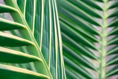 Πράσινη φύση φύλλων κινηματογραφήσεων σε πρώτο πλάνο για το υπόβαθρο Δημιουργικός φιαγμένος από πράσινα φύλλα δέντρων Στοκ εικόνες με δικαίωμα ελεύθερης χρήσης